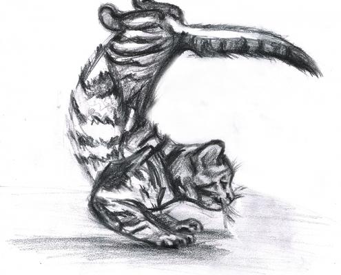 Illustration fait main chat